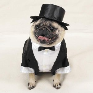 Dog Tux with Tails and Top Hat