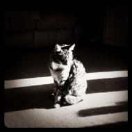 Cat, Sunlight, Instagram