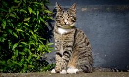 Cat Portrait 2