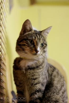Cat Portrait 3
