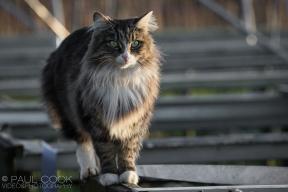 Cat Portrait 5