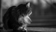 Cat Portrait 6