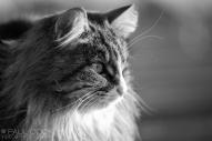 Cat Portrait 7