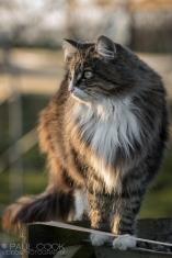 Cat Portrait 8