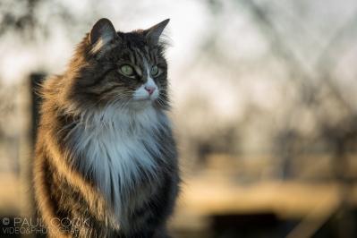 Cat Portrait 9